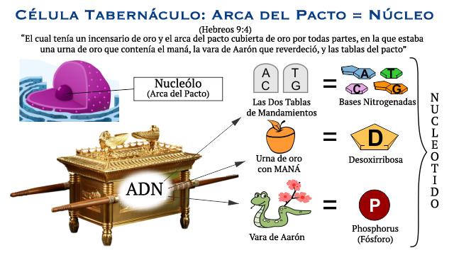 Ronald Megiddo Biblia Cuántica El Arca Del Pacto Y El Núcleo Celular